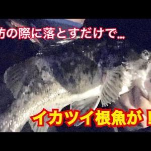 #22 女川に行ったらクロソイとアイナメが簡単に釣れた。【宮城県】【釣り】