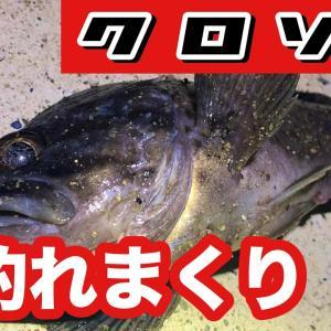 極寒の中クロソイが爆釣‼︎‼︎〜ロックフィッシュ釣行後編〜