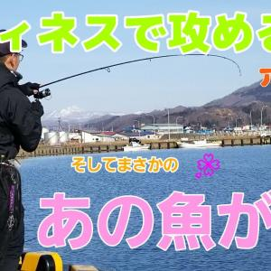 【ロックフィッシュ】フィネスで攻める!1月の北海道アイナメ!まさかのあの魚も…