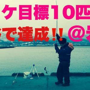 【釣り】北海道のホッケ釣り 〜やっと本気で釣れた!〜