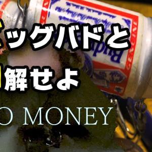 【STAY】ビッグバドと和解せよ!北海道のナマズを釣った話をめっちゃ語る【HOME】