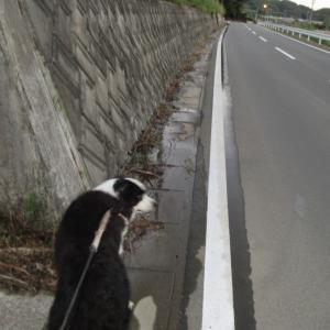 実は、反対側も草を刈った行き届いた飼い主@オレ(走る動画有)