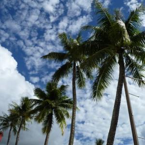 グアムの新型コロナウイルス関連の死亡者133人に