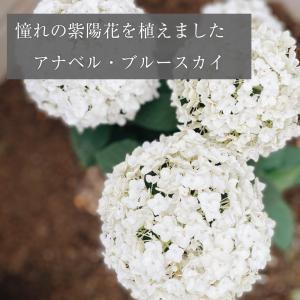 【庭づくり】憧れのあじさいを植えました*ユーカリとユーフォルビアも♩
