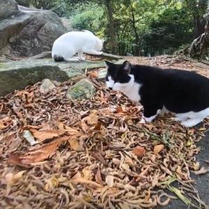 ベロだし猫ちゃん