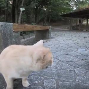 頭をすりすりしあう仲良し猫。カメラがお邪魔で気になるらしい