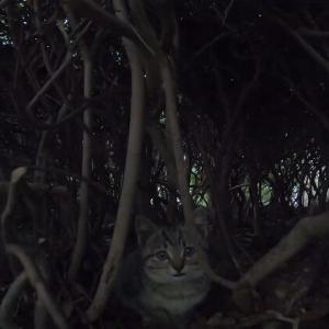 茂みの中で可愛い子猫に出会った