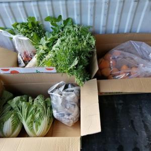 野菜と柿を貰う