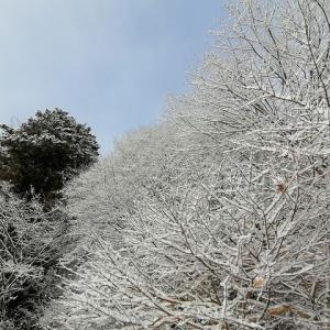 一面の雪野原