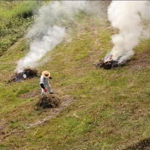 草刈りした草を燃やす