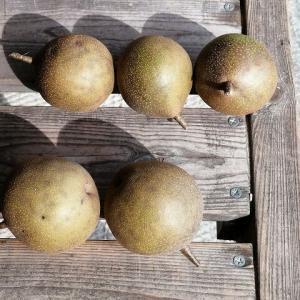 実家の梨を食べる