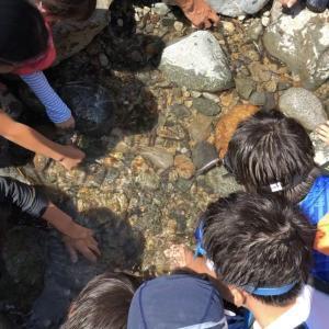 夏休みは#五十沢キャンプ場で決まり!川遊び&カブトムシ探しで自然を学ぶ