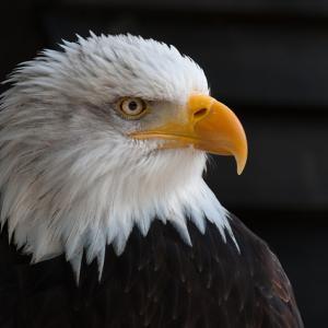 米大統領選:トランプvsバイデンを見るポイント