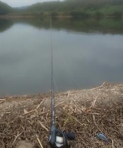 久しぶりのDolphin pond