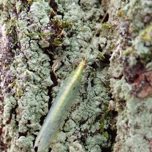 冬は木の表面に何かいるらしい。。