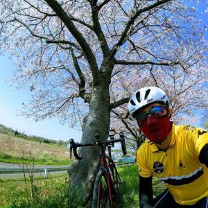 ガーミン先生のVIVOSMART4とエッジ130を連携、心拍数と桜🌸を眺めながらのライドです