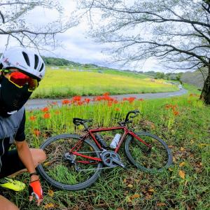 ツール・ド・フランスさいたまクリテリウムのジャージマスクが届きました!