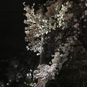 桜は何も悪くないのに、、