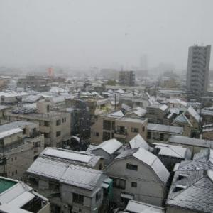 ほんとに雪~