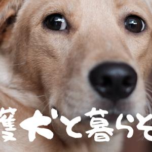保護犬の里親になるまでの流れはどんな感じ?