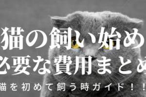 【猫の飼い始め】絶対必要な費用まとめ