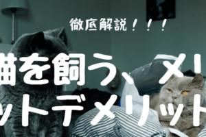 【猫を飼う】メリットとデメリット徹底解説!!