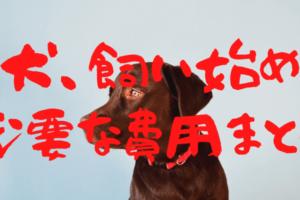 【犬、飼い始め】絶対必要な費用まとめ‼︎