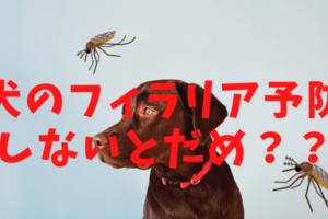 【犬のフィラリア予防】フィラリアって何?時期はいつから?