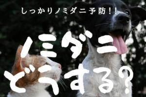 【犬と猫のノミダニ】しっかり予防しよう!!