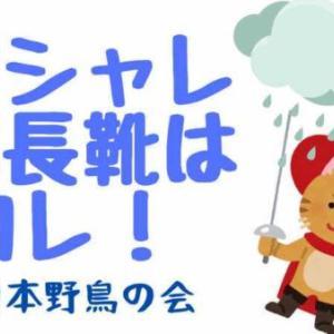 【日本野鳥の会】レインブーツが歩きやすくてオシャレ