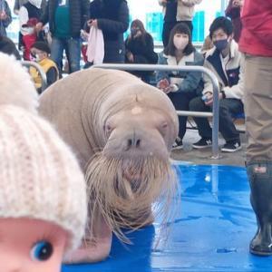 鳥羽を楽しむ! キューピーがセイウチに会うために水族館へ andiamo(イタリア語で「行きましょう!」)