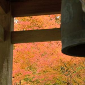 趣味の写真館 「 雲辺寺の紅葉2019 」