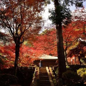 趣味の写真館 「 西山興隆寺の紅葉 」