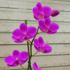 店舗内の花