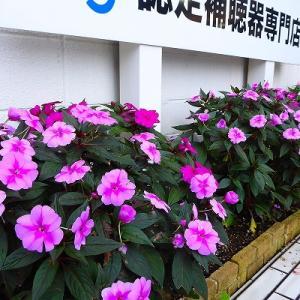 店舗前駐車場の花壇