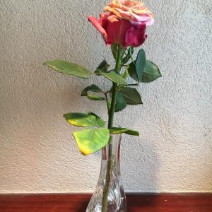 なにこれ?切り花なのに枯れない薔薇