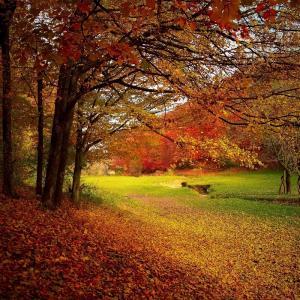 紅葉は山を装い サンマは我が腹を満たす