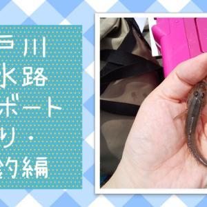 【江戸川放水路】ハゼのボート釣り 実釣編