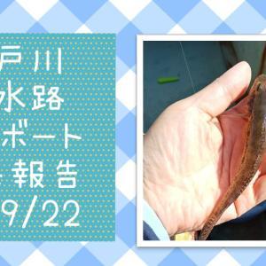 【江戸川放水路】ハゼのボート釣り 9月 釣果報告
