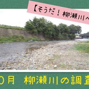 そうだ!柳瀬川に行こう【2020年10月の様子】