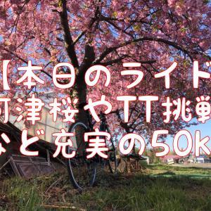 【本日のライド】朝の2時間50kmで河津桜を見て、TT挑戦する充実ライド
