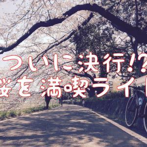 【2021桜を見る!】瀬谷の海軍道路と境川の桜トンネルを満喫ライド!?