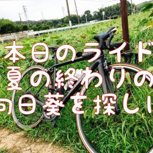【本日のライド】夏の終わりに向日葵を見に行くポタリング(20210829)