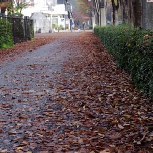 秋の向陽台