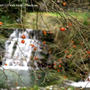 冬の飛鳥川:奈良県明日香村