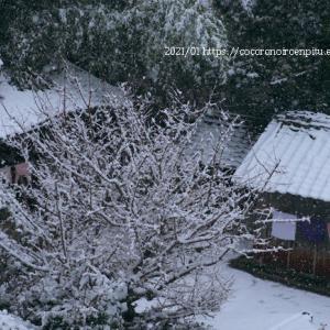 雪の日:御所市