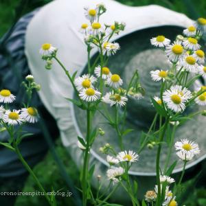 野に咲く花のように・・・・・・。