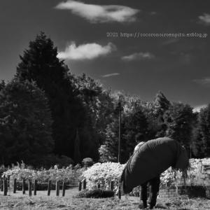 強烈な暑さの日:奈良県「馬見丘陵公園」