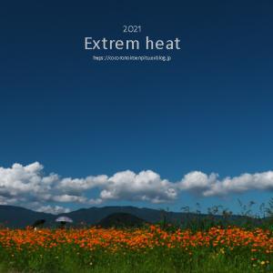 猛暑日続く:橿原市藤原宮跡