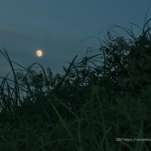 月夜の散歩写真
